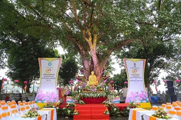 Conmemoran 60 aniversario del obsequio de arbol Bodhi de presidente indio a Vietnam hinh anh 1