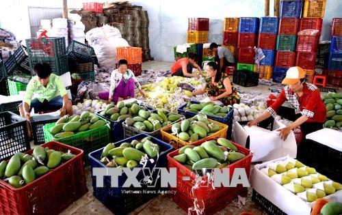 Exportaciones de frutas vietnamitas totalizan 3,85 mil millones de dolares en 2019 hinh anh 1