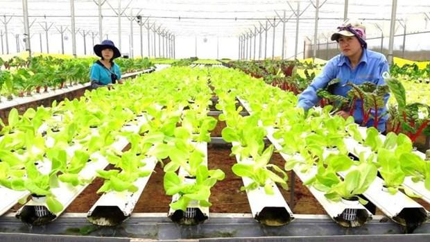 Registran en Vietnam 17 grandes proyectos de inversion en sector agricola en 2019 hinh anh 1