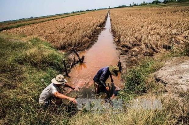 Pronostican empeoramiento de salinizacion en Delta de Mekong hinh anh 1