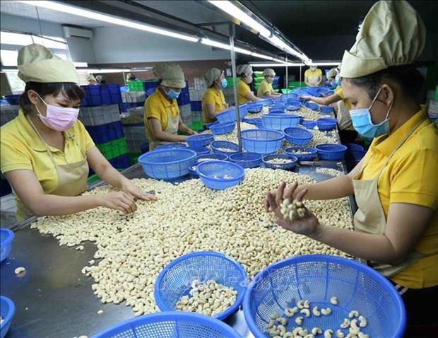 En alza exportaciones de anacardo de Vietnam en 2019 hinh anh 1