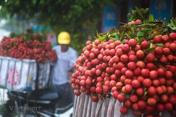 Japon, puerta para ingreso de lichi vietnamita a otros mercados hinh anh 1
