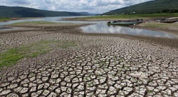 Severa sequia en 2020 provocara aumento de precios de productos agricolas de Tailadia hinh anh 1