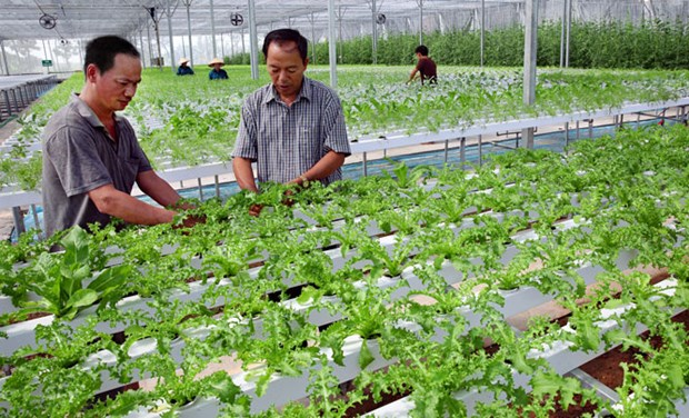 Fija Vietnam meta de lograr 42 mil millones de dolares de exportaciones agricolas en 2020 hinh anh 1