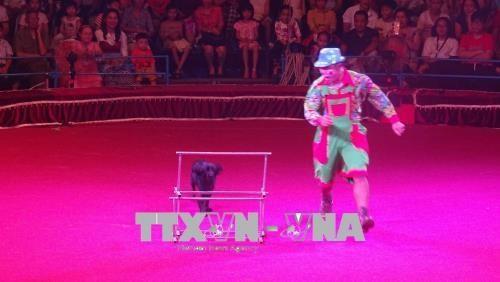Celebraran en Ciudad Ho Chi Minh Gala Internacional de Circo 2020 hinh anh 1