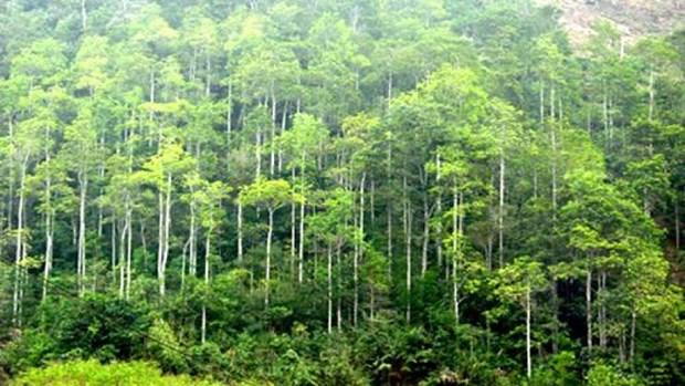 Promulgan en Vietnam estandares nacionales de manejo forestal hinh anh 1