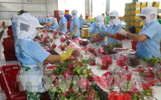 Aspira Vietnam a ingresar cinco mil millones de USD por ventas de frutas y vegetales en 2020 hinh anh 1