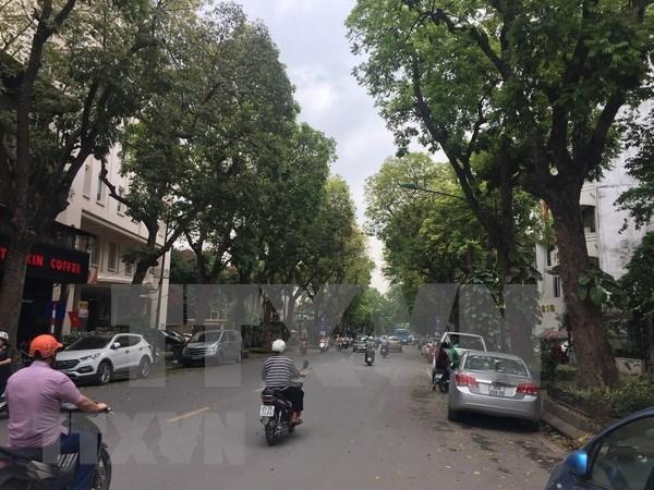 Hanoi plantara mas de mil arboles para festejar el Tet hinh anh 1