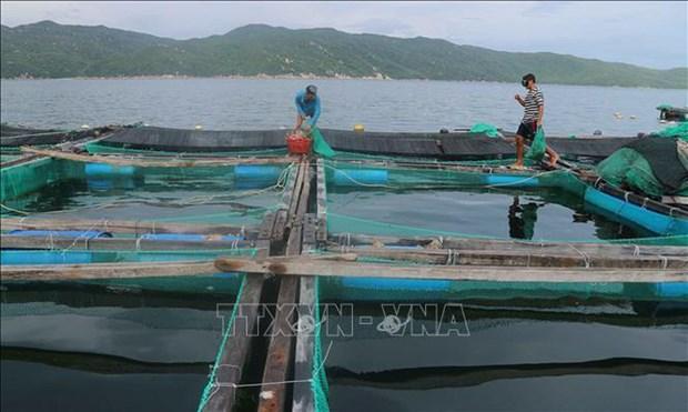 Capital de la industria camaronera de Vietnam hinh anh 1