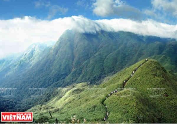 Vietnam traza estrategia para conservar su biodiversidad hinh anh 1