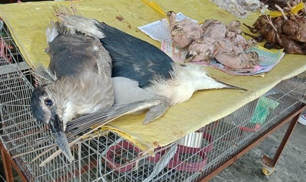 Fortalece Vietnam lucha contra el contrabando de animales salvajes ante brote de coronavirus hinh anh 1