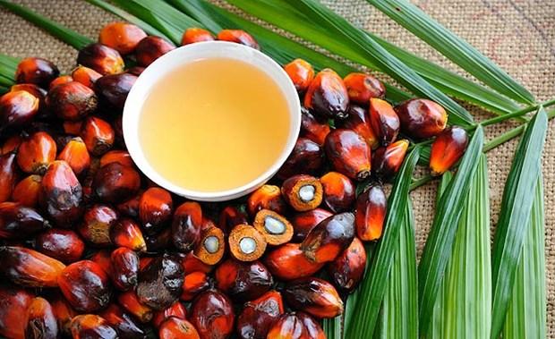Recomiendan a productores malasios de aceite de palma aplicar tecnologias para mejorar productividad hinh anh 1