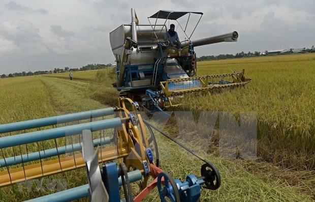 Aspira Tailandia a recuperar el trono mundial de arroz hinh anh 1