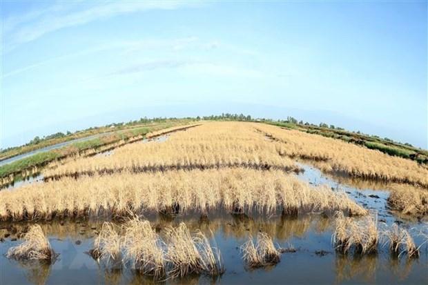 Delta del Mekong hace frente a salinizacion hinh anh 1