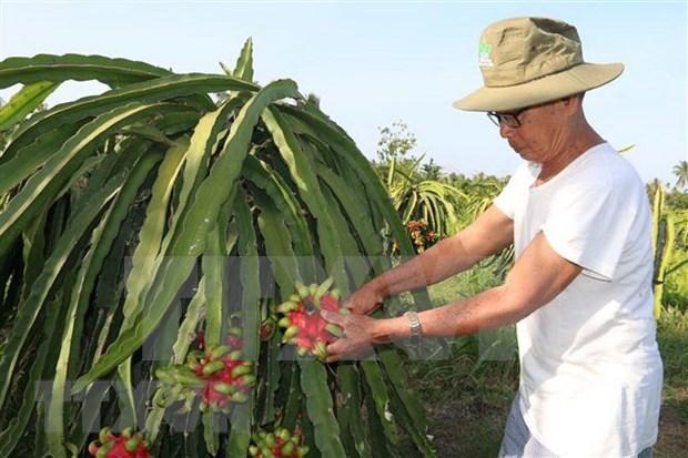 EVFTA trae oportunidades y desafios a produccion agricola vietnamita hinh anh 1