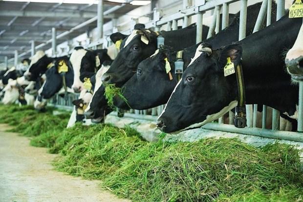Fabrica lechera de Vietnam accede a mercado de China hinh anh 1