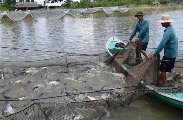 Aplican en Indonesia moderna tecnologia de recirculacion acuicola hinh anh 1