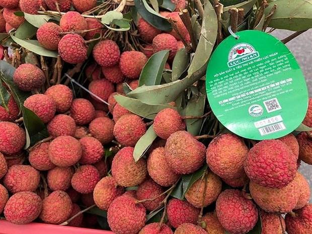Lichi de Luc Ngan entre los productos tipicos de provincia vietnamita de Bac Giang hinh anh 1