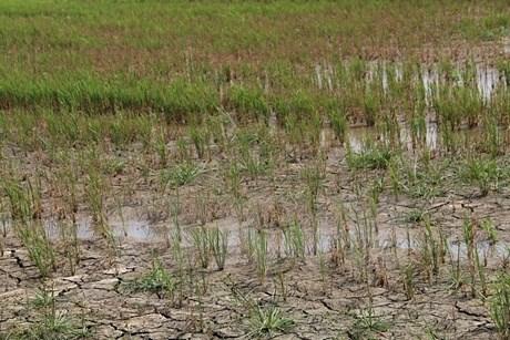 Provincia vietnamita invierte en proyecto de agua potable para afectados por sequia hinh anh 1