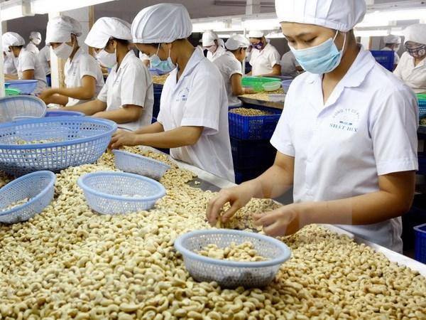 Vietnam registra ingreso multimillonario por exportaciones de productos agrosilvicolas y acuicolas hinh anh 1