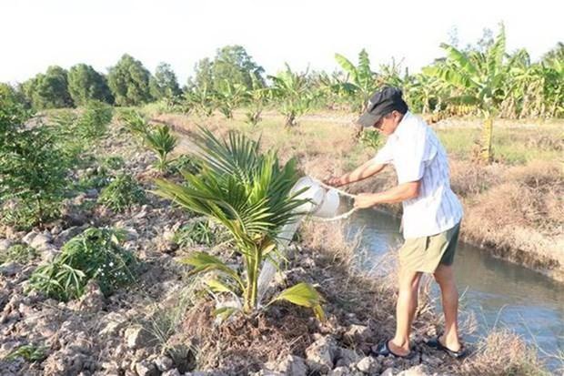Salinizacion del suelo en delta de rio Mekong en Vietnam se torna compleja en marzo hinh anh 1