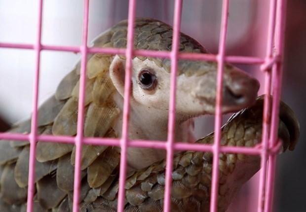WFF en Vietnam aboga por prohibir el comercio y consumo de vida silvestre hinh anh 1