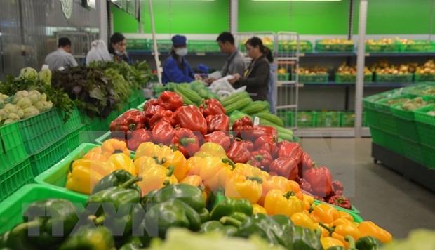 Aumentan exportaciones de verduras y frutas de Vietnam a Estados Unidos hinh anh 1