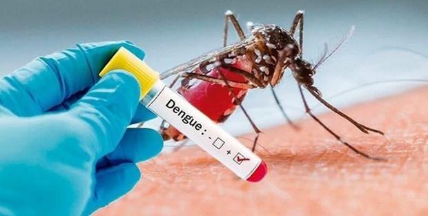 Enfrenta Indonesia brote de dengue hinh anh 1