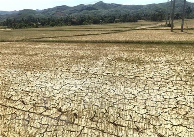 Sequia afecta la produccion agricola en Camboya hinh anh 1