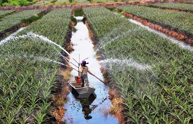 Destina Indonesia mas de tres mil millones de dolares para agricultura de base tecnologica hinh anh 1