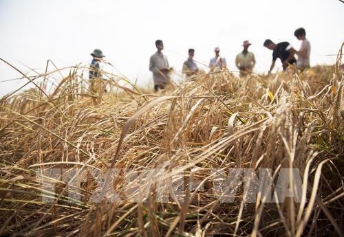 Fondo Verde para el Clima respalda a Vietnam a mejorar la resiliencia climatica hinh anh 1