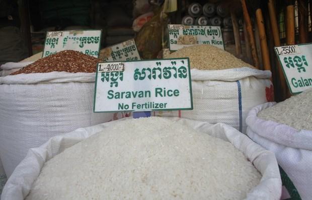 Camboya mantiene estable suministro y precio del arroz a pesar del COVID-19 hinh anh 1