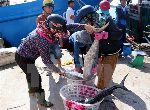 Provincia costera vietnamita por intensificar lucha contra pesca ilegal hinh anh 1