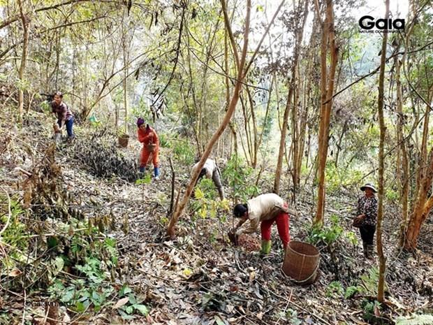 Vietnam restaura siete hectareas de habitat forestal para especies en peligro de extincion hinh anh 1