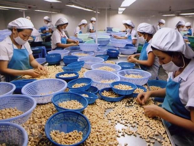 Aumentan exportaciones de anacardo de Vietnam a Estados Unidos hinh anh 1