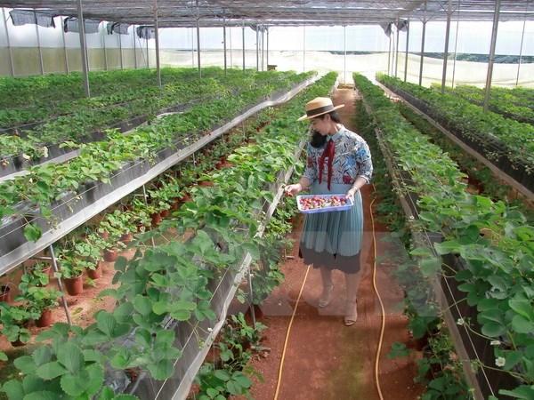 Ciudad Ho Chi Minh cuenta con mas de mil 700 empresas agricolas hinh anh 1