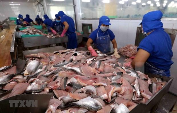 Disminuyen exportaciones pesqueras de Vietnam por COVID-19 hinh anh 1