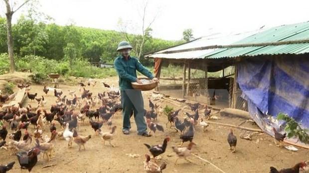 Provincia vietnamita declara fin de epidemia de gripe aviar A/H5N6 hinh anh 1