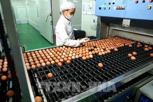 Prohibe Tailandia la exportacion de huevos de gallina durante siete dias hinh anh 1