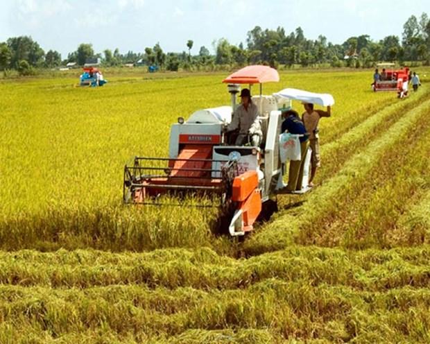Productividad de arroz en Delta del rio Mekong sera de tres millones de toneladas hinh anh 1