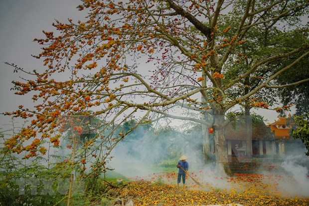 Embellecen las flores de algodoneros rojos areas rurales vietnamitas en marzo hinh anh 1