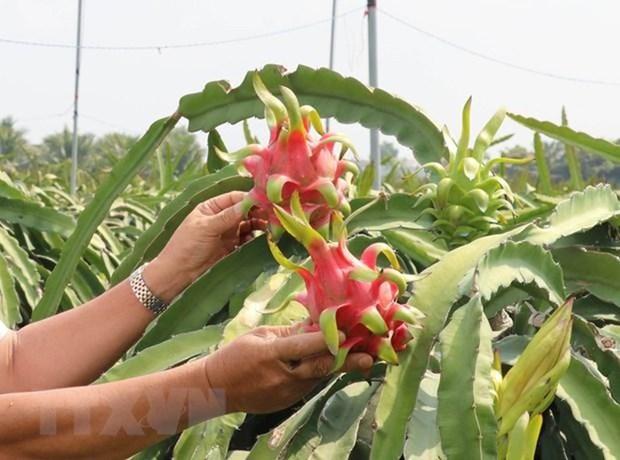 Exporta Vietnam frutas a China mediante trenes con contenedores refrigerados hinh anh 1