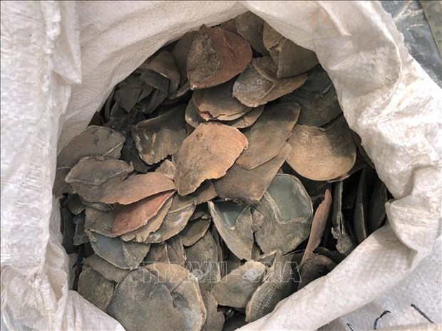 Incauta Malasia mas de seis toneladas de escamas de pangolin hinh anh 1