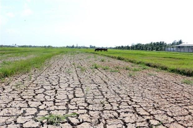 Continua en abril la intrusion salina en Delta del Mekong de Vietnam hinh anh 1