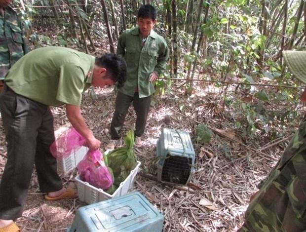 Liberan en Vietnam animales salvajes al Parque Nacional Bu Gia Map hinh anh 1