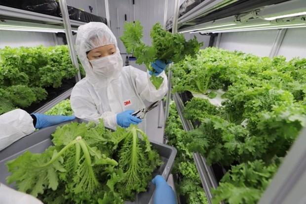 Singapur planea aumentar produccion nacional de alimentos hinh anh 1