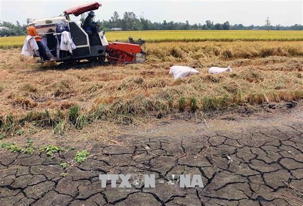 Reciben provincias del Delta Mekong asistencia para hacer frente a la sequia hinh anh 1