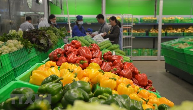 Exportaciones de verduras y frutas de Vietnam alcanzan 836 millones de dolares en primer trimestre hinh anh 1