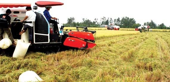 Vietnam busca un crecimiento del PIB de siete por ciento hinh anh 1