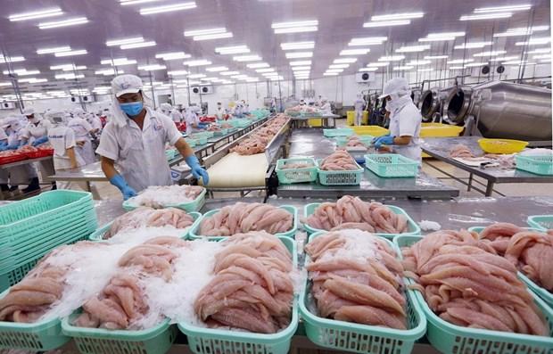 Afronta pescado Tra de Vietnam dificultades en sus exportaciones hinh anh 1
